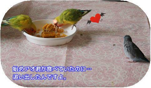 トウモロコシ①