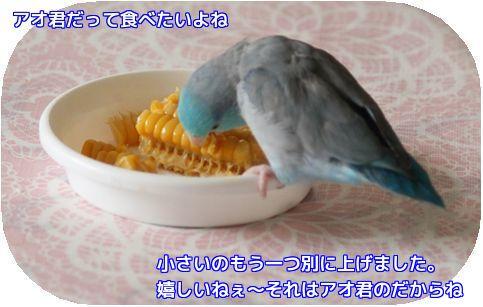 トウモロコシ②