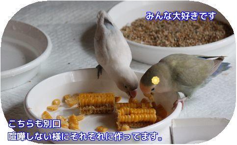 トウモロコシ③