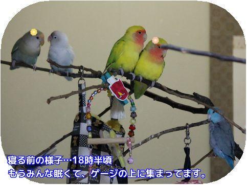 鳥達の寝る時間