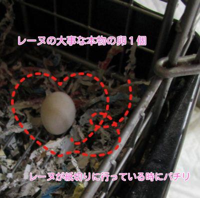 昨日の続き⑤卵