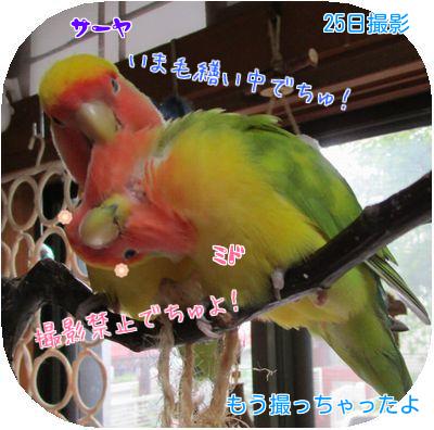 鳥の日々①