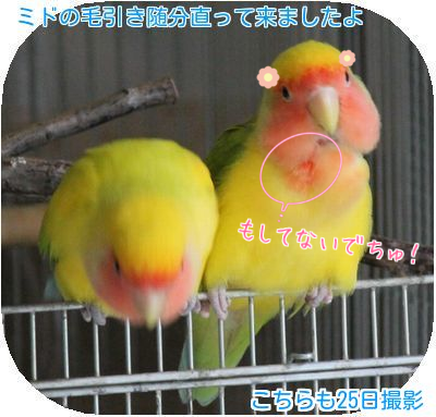 鳥の日々②