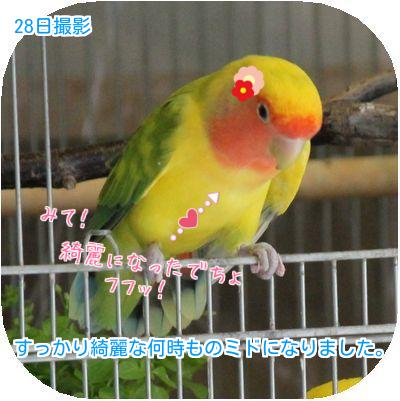 鳥の日々③