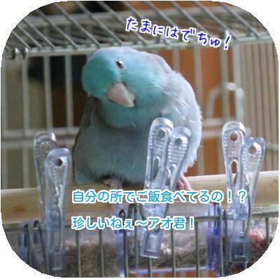 鳥の日々④