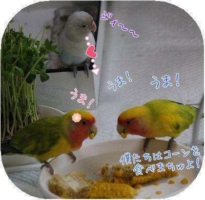 鳥の日々⑥