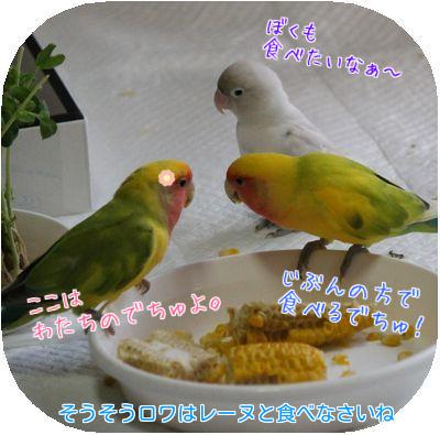 鳥の日々⑦