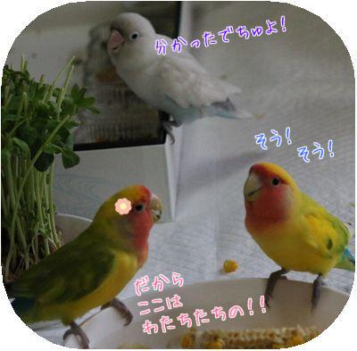 鳥の日々⑧