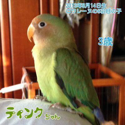 ロワレーヌ6羽目雛