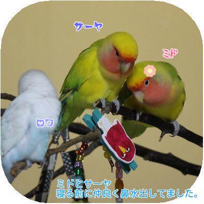 鼻水の2羽