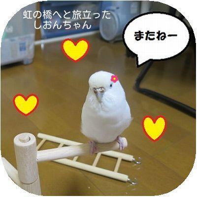 天使のしおんちゃん②