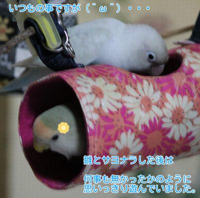 里子に行く日⑤