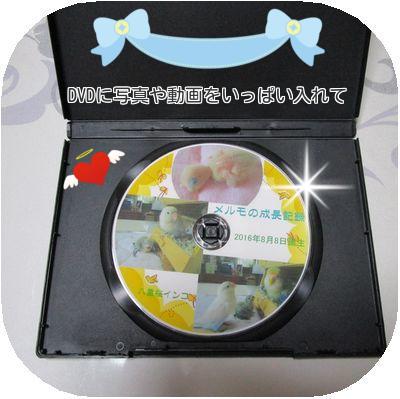 DVDメルモ②
