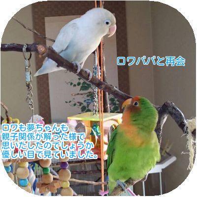 ⑦ロワと夢ちゃん