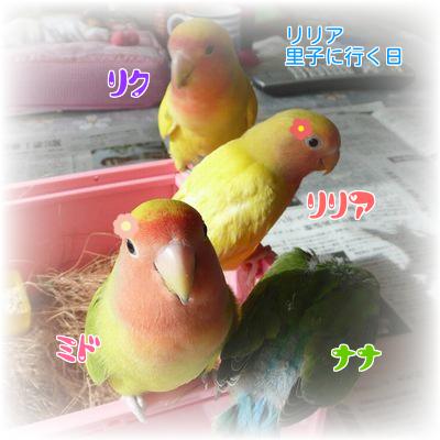 ⑤リリア家族