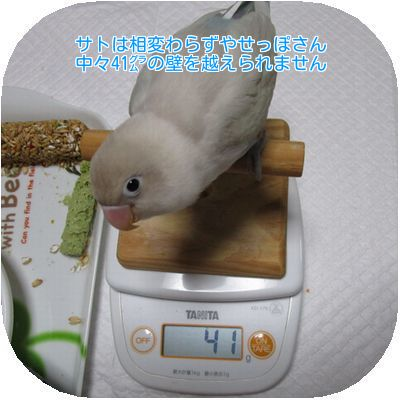 ⑨サトの体重