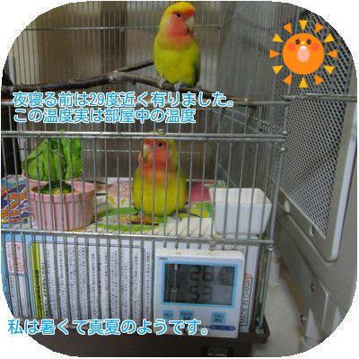 ⑧部屋の温度