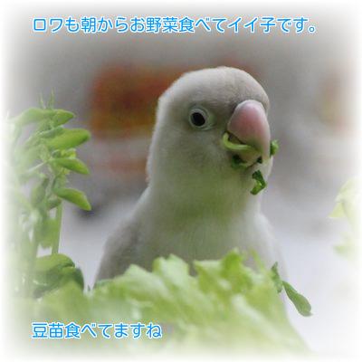③ロワは野菜好き