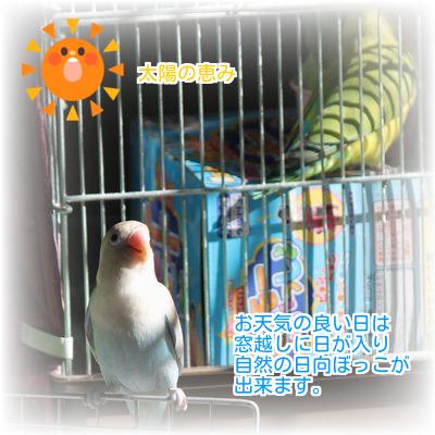 ①太陽の恵み