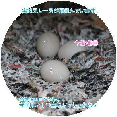 ④レーヌの卵