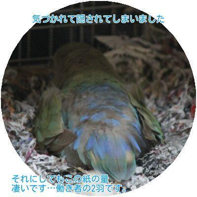 ⑤レーヌの大事な卵