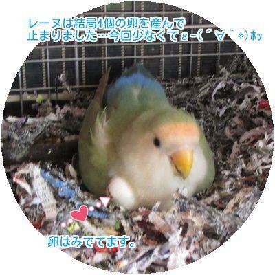 ①レーヌの卵