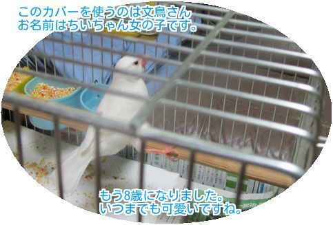 ⑩文鳥のちぃちゃん