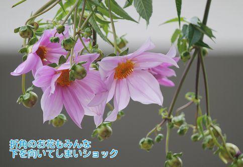 ⑤下を向いた花