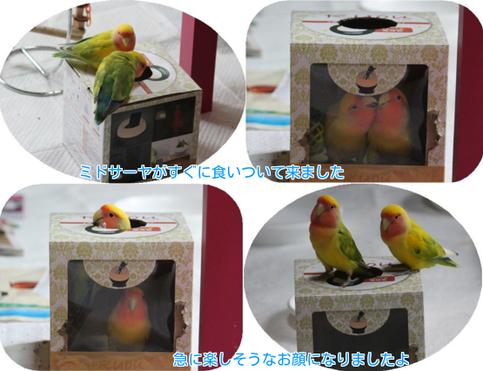 ⑤空き箱遊具