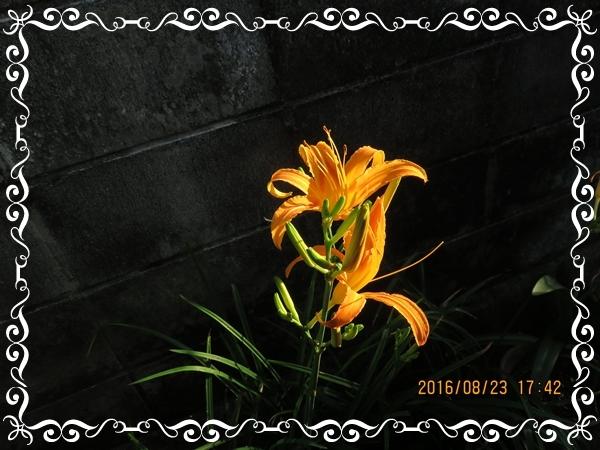 IMG_1115-1.jpg