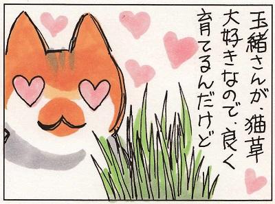 猫草事情1 1-2