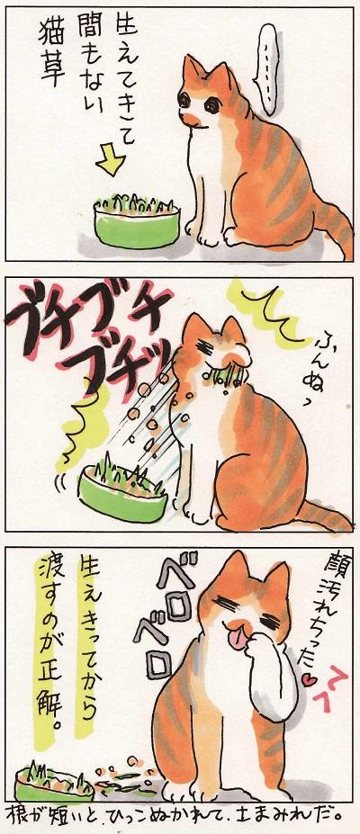 猫草事情1 2-2