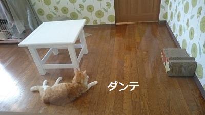 ダンテ DSC_1577