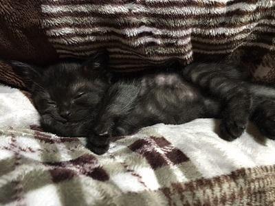 ジュビアちゃん 寝  image1