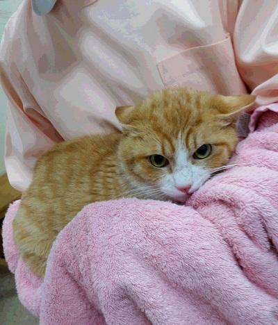 ひき逃げの猫ちゃん 20160408_180630