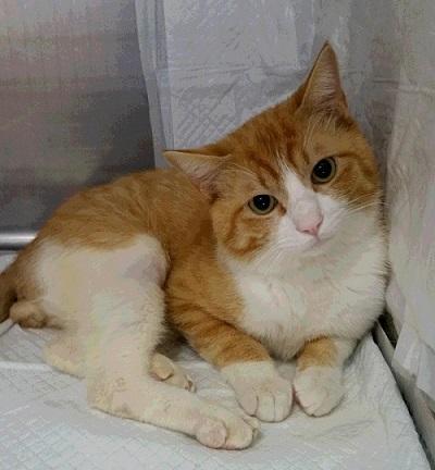 ひき逃げ猫ちゃん 20160531_103328