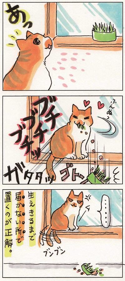 猫草事情2 2-2