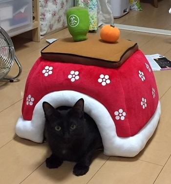 マリとレモ image3