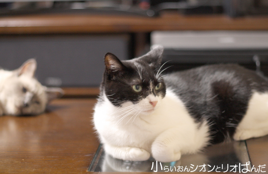 iyashi258.jpg