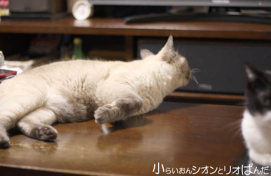 iyashi260.jpg