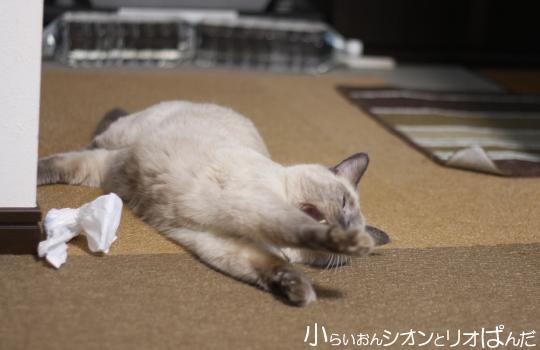 kawaii251.jpg