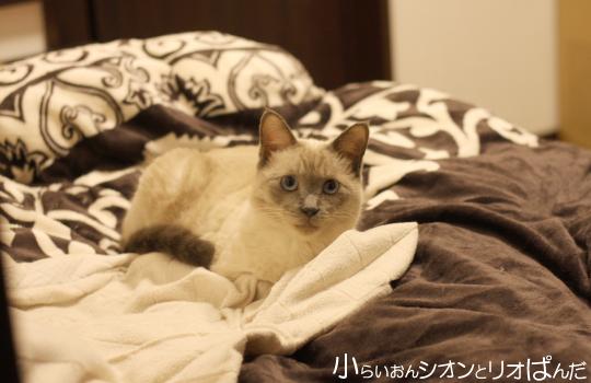 kawaii256.jpg