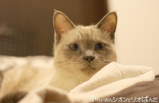 kawaii257.jpg