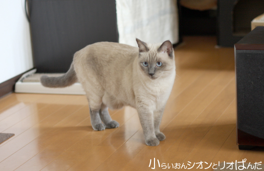 omoshiro264.jpg