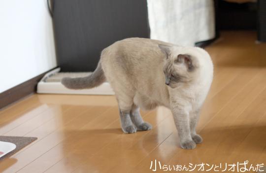 omoshiro265.jpg