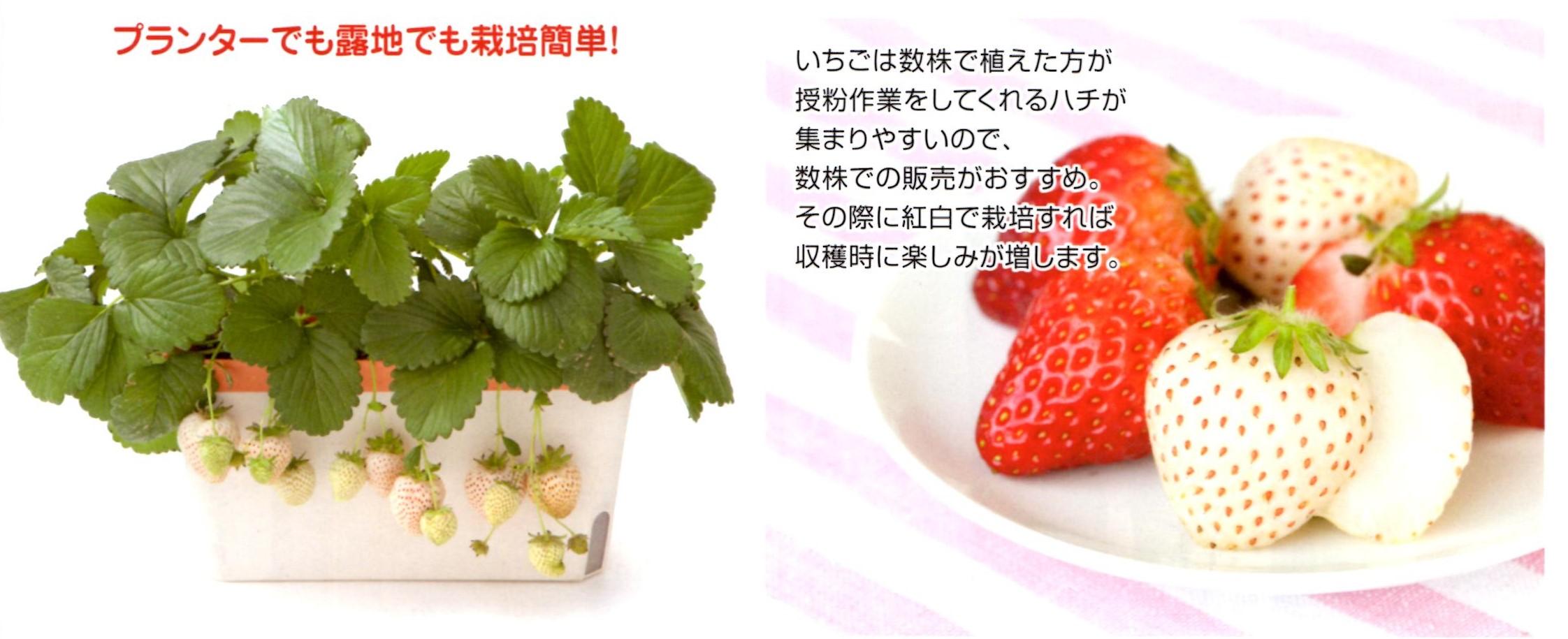 ae-image.jpg