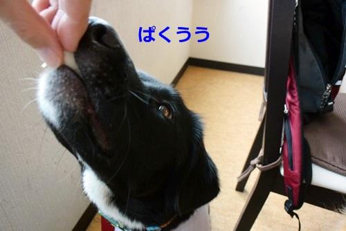 DSC_9822.jpg