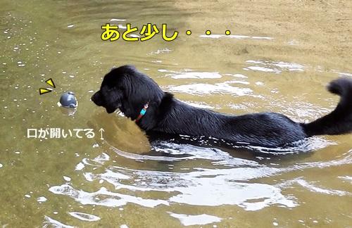 IMG_20160716_161532.jpg