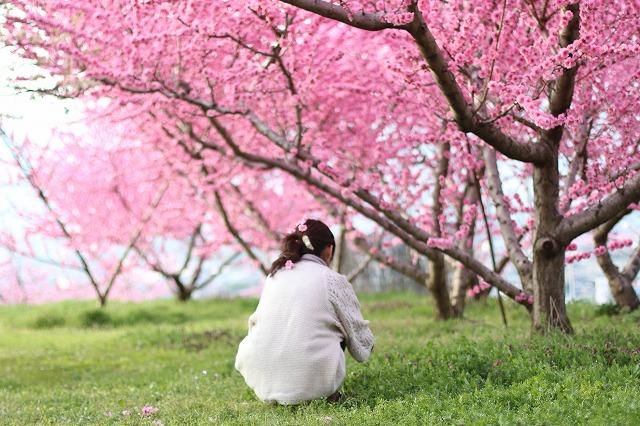 IMG_7301桃の花