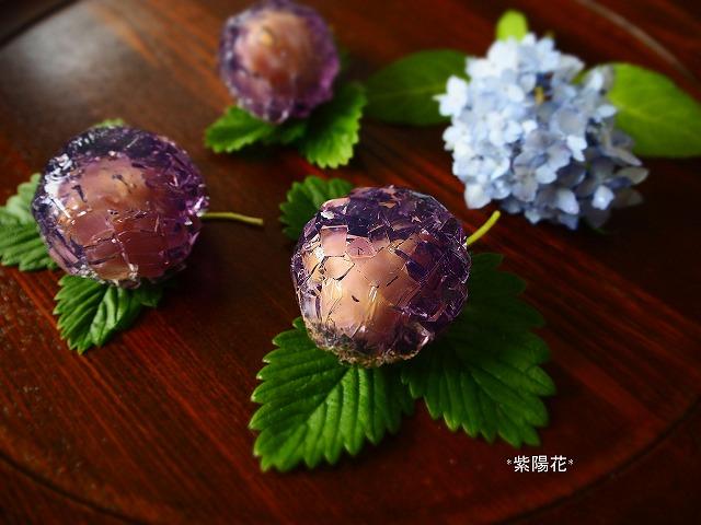 P5260003紫陽花